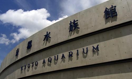 京都水族館に行ってイルカショー見てきた!