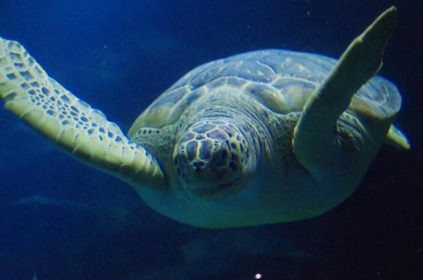 SEALIFE_London_Aquarium_1