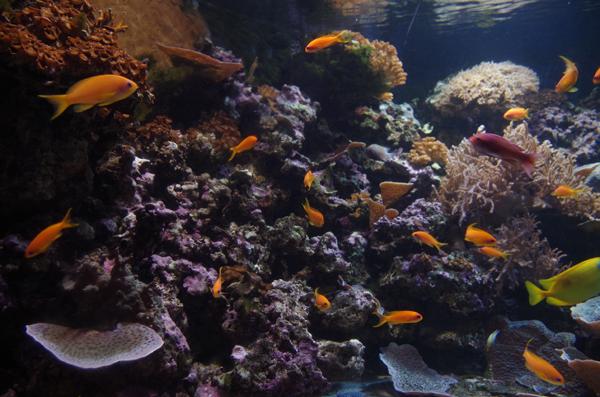 SEALIFE_London_Aquarium_2