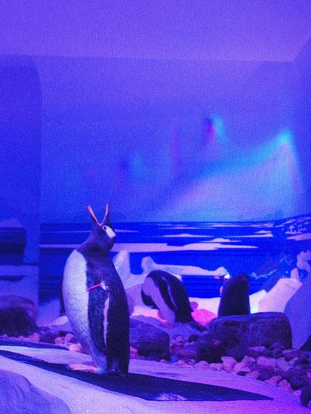 SEALIFE_London_Aquarium_9