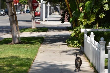 ビバリー・ヒルズでセレブ気分になってみる in LA