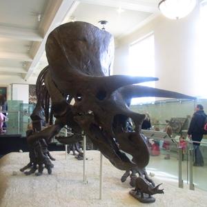 american_museum_3