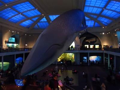 アメリカ自然史博物館へ行ってきた in ニューヨーク