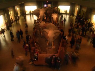 american_museum_5