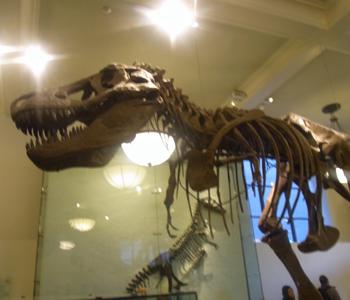 american_museum_7