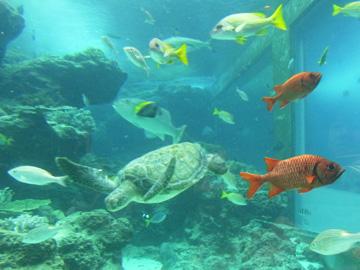 cyuraumi_aquarium_1