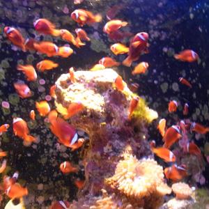 cyuraumi_aquarium_6