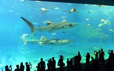 美ら海水族館に行って来た! in 沖縄