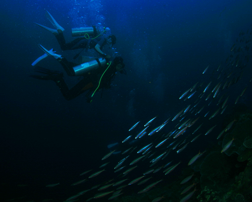diving_moalboal_3