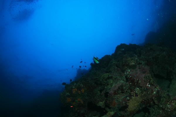 diving_moalboal_5