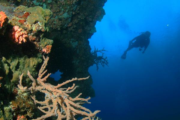 diving_moalboal_6