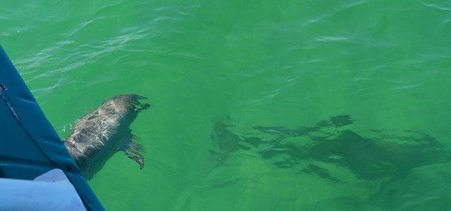 ポート・スティーブンスで野生のイルカを見てきた! from シドニー