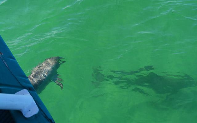 portstephans dolphin