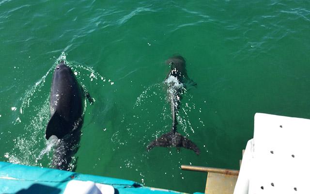 portstephans dolphins